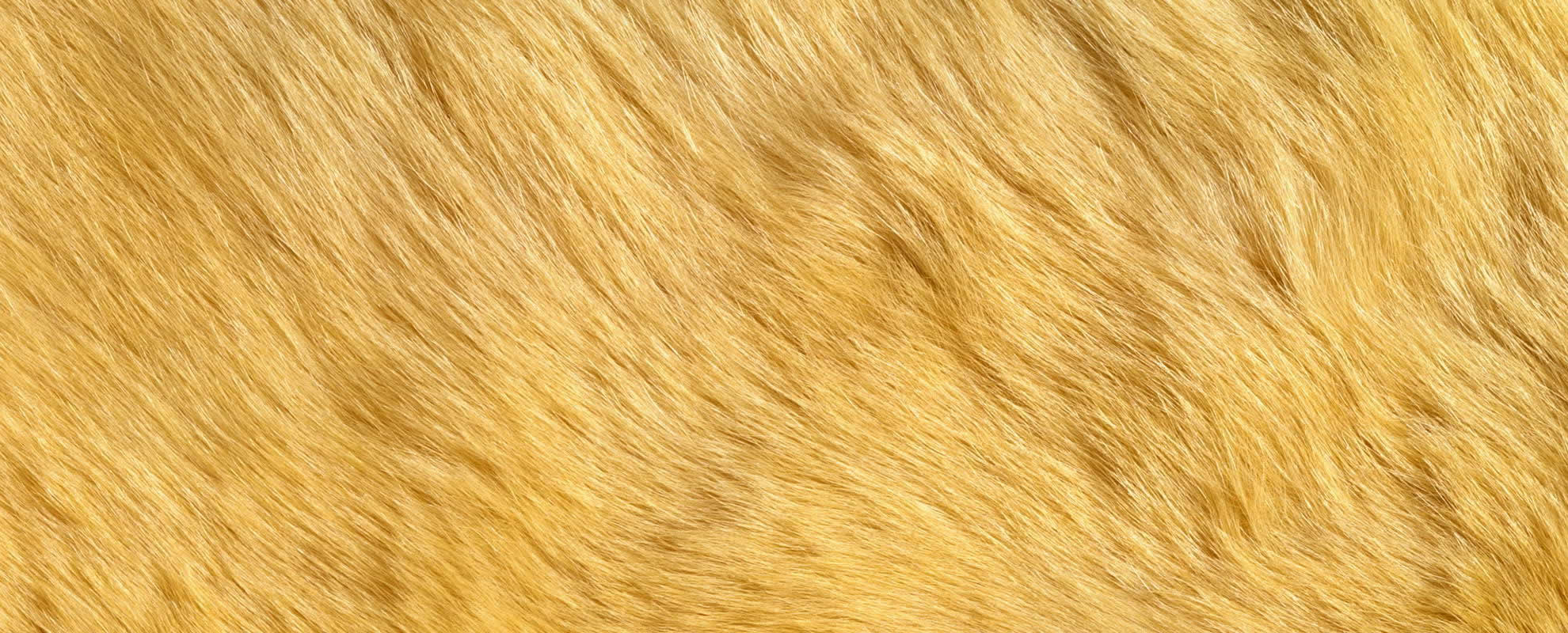 Animal-Fur-Skin-Background-20